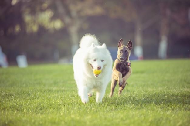 Skal du med til hundetræf i Tivoli?