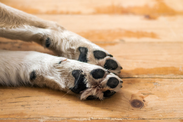 saadan klipper du negle paa din hund